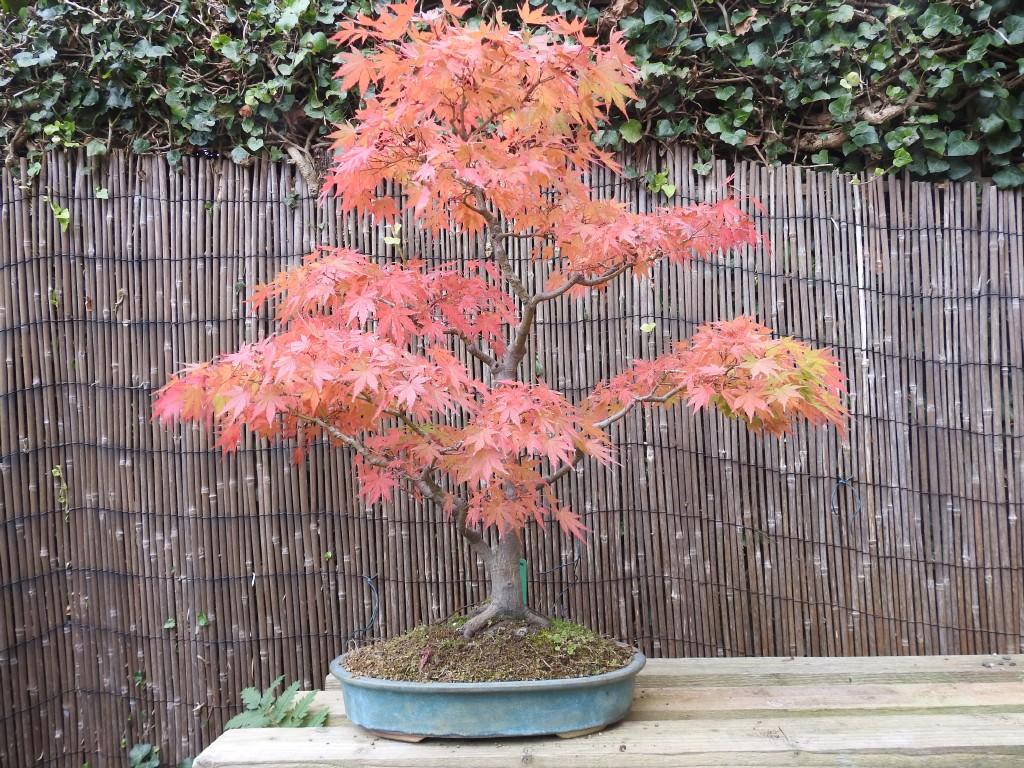 Garden Specialist Design Horticulture Wildlife Bonsai